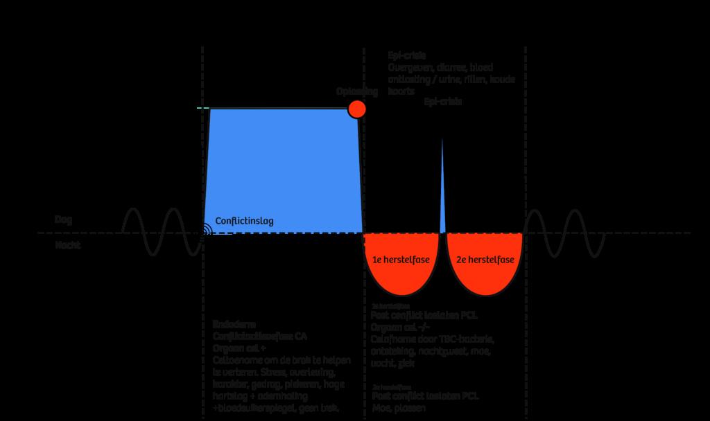 Endoderm-tweefasigheid-HeartConnection_Nederland®